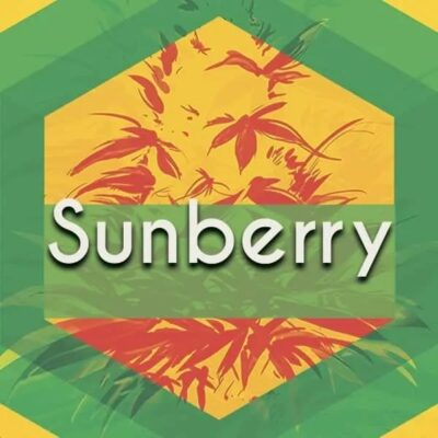Sunberry Logo