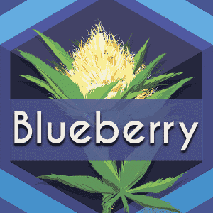 Blueberry, AskGrowers