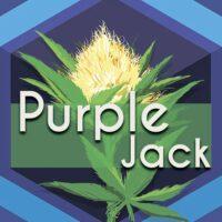 Purple Jack (Purple Jack Herer) Logo