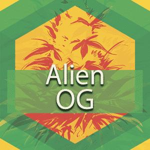 Alien OG (Alien OG Kush), AskGrowers