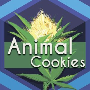 Animal Cookies (Animal Crackers), AskGrowers