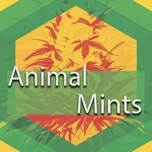 Animal Mints, AskGrowers