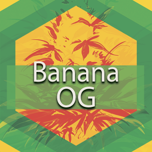 Banana OG, AskGrowers