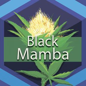 Black Mamba, AskGrowers