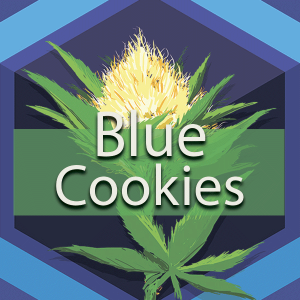 Blue Cookies (Blue GSC), AskGrowers