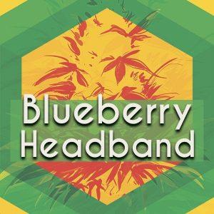 Blueberry Headband (Blue Headband), AskGrowers
