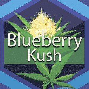 Blueberry Kush (Blueberry OG Kush), AskGrowers