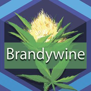 Brandywine, AskGrowers