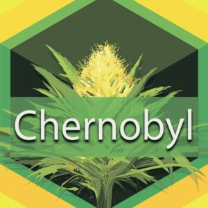 Chernobyl, AskGrowers