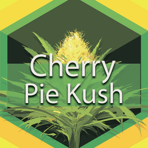Cherry Pie Kush, AskGrowers