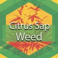 Citrus Sap Weed Logo