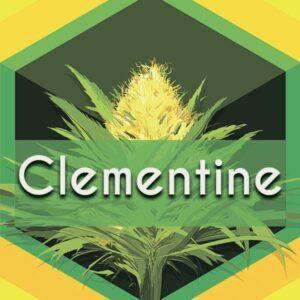 Clementine, AskGrowers