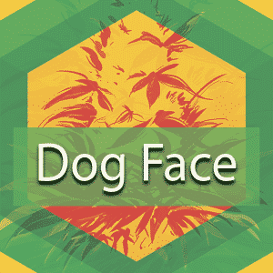 Dog Face, AskGrowers