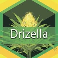 Drizella Logo