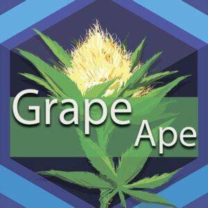 Grape Ape, AskGrowers