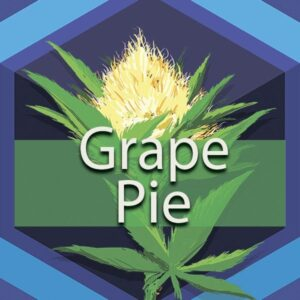 Grape Pie, AskGrowers