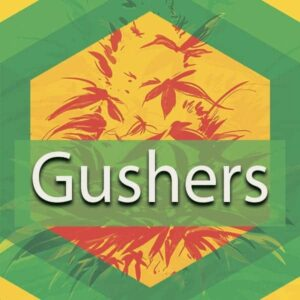 Gushers (White Gushers), AskGrowers