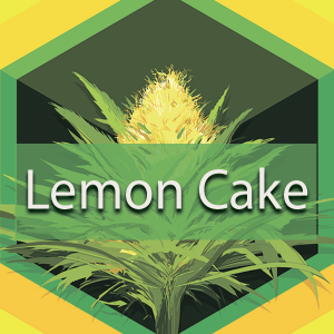 Lemon Cake, AskGrowers