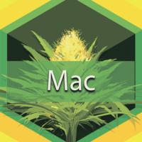 Mac (Miracle Alien Cookies) Logo