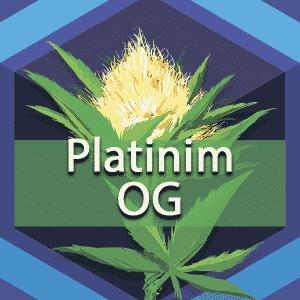 Platinum OG, AskGrowers