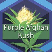Purple Afghan Kush Logo