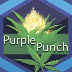 Purple Punch, AskGrowers