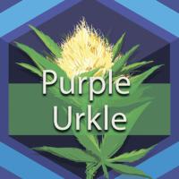 Purple Urkle Logo