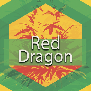 Red Dragon, AskGrowers