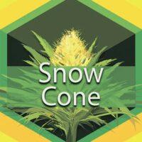 Snow Cone Logo