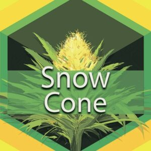 Snow Cone, AskGrowers