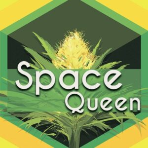 Space Queen, AskGrowers