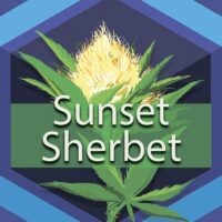 Sunset Sherbet (Sunset Sherbet, Sherbet) Logo