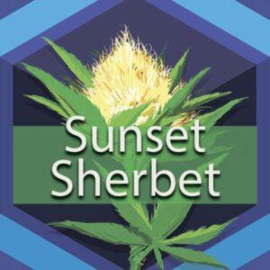 Sunset Sherbet (Sunset Sherbet, Sherbet), AskGrowers