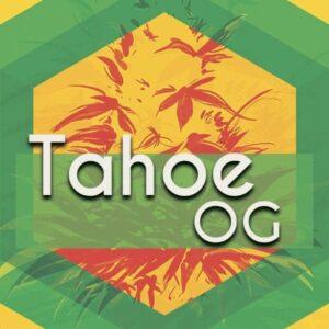 Tahoe OG (Tahoe OG Kush), AskGrowers