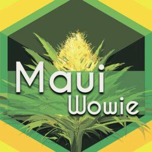 Maui Wowie (Maui Waui), AskGrowers