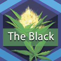 The Black Logo