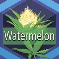 Watermelon (Watermelon Kush) Logo
