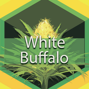 White Buffalo, AskGrowers