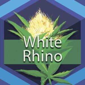 White Rhino, AskGrowers