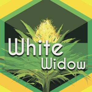 White Widow, AskGrowers