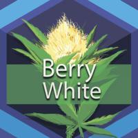 Berry White (Barry White) Logo