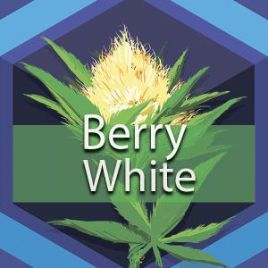 Berry White (Barry White), AskGrowers