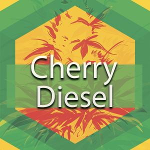 Cherry Diesel (Cherry Turbo Diesel), AskGrowers