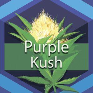 Purple Kush, AskGrowers