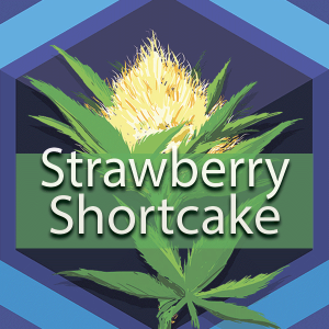 Strawberry Shortcake, AskGrowers