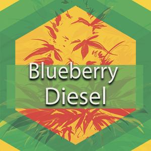 Blueberry Diesel (Blueberry Sour Diesel), AskGrowers