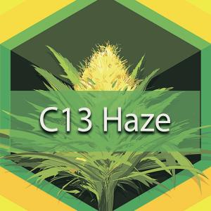 C13 Haze, AskGrowers