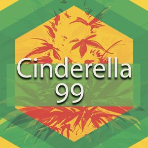 Cinderella 99 (C99, Cindy 99), AskGrowers