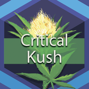 Critical Kush, AskGrowers