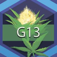 G-13 (G13) Logo